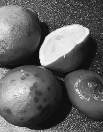 Lemon (study) VI, 2016