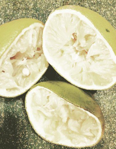 Lemon (study) V, 2016
