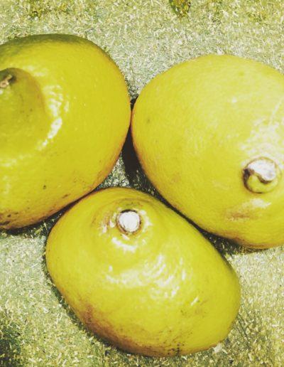 Lemon (study) VIII, 2016