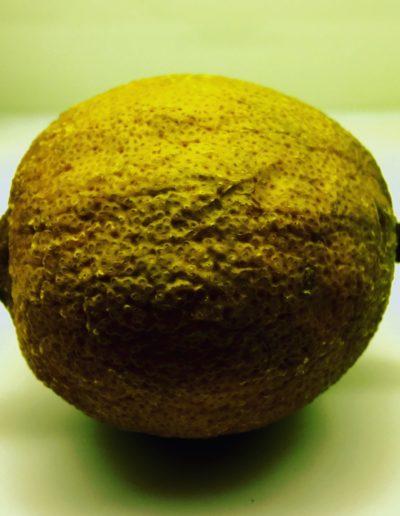 Lemon (study) III, 2016